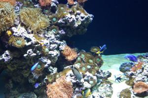 Gigantyczne wirusy: występują w oceanach, niektóre mają prawie 3000 genów