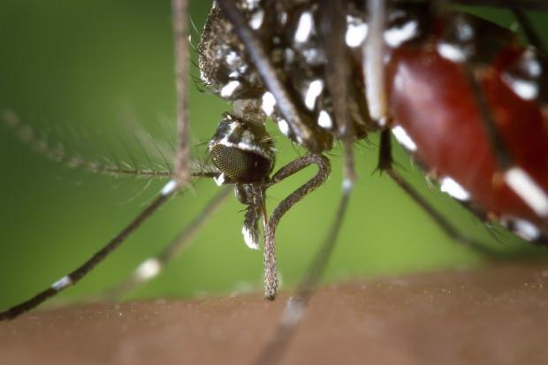Azja: wzrost zachorowań na dengę i czikungunię. To choroby przenoszone przez komary