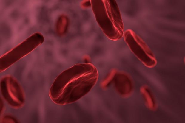 Badania: grupa krwi może wpływać na przebieg COVID-19