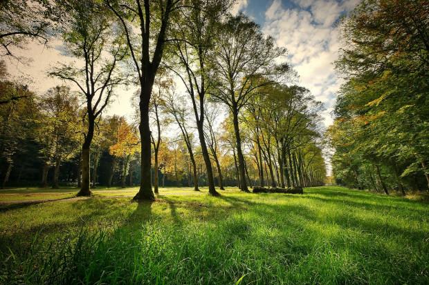Park w Reptach: wycieczka botaniczno-przyrodnicza. Można zdobyć 2 punkty